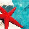 Ловля толстолобика на крымских водоёмах на технопланктон и гороховые каши - последнее сообщение от IvanTur